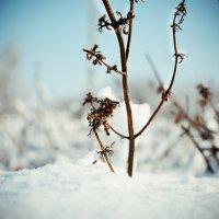 зима :: вика