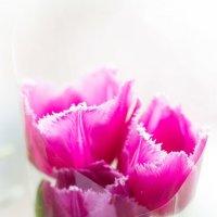 Самые милые, нежные, обворожительные, прекрасные - с ПРАЗДНИКОМ!!!!!!!! :: Лана Лазарева