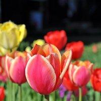 Все цветы нашим женщинам! :: Андрей Синицын