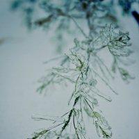 Зима :: Елена Пономарева