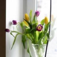 Девочки, милые, пусть каждая из нас расцветёт этой весной! :: Ирина Данилова