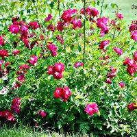 Цветы :: Ярослав Кулида