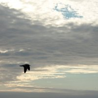 """""""Одиночество - удел того, кто нашел себя."""" :: Zhanna Kushnareva"""