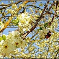 Русская весна в Севастополе :: Кай-8 (Ярослав) Забелин