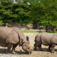 rhinoceros :: Алексей Гудков