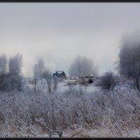Морозным утром* :: Maxim Agafonoff
