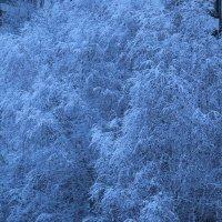 снежные деревья :: нестор сидоров