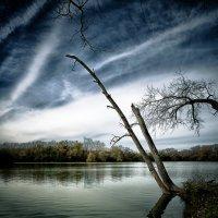 Склонившись над водой... :: Gene Brumer