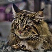 Котёнок-из серии Кошки очарование мое! :: Shmual Hava Retro
