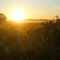 На рассвете в поле :: Павлова Татьяна Павлова