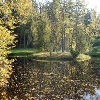Небольшой пруд с островом Уединения посередине :: Елена Павлова (Смолова)