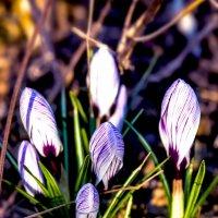 весна..... :: Марина Брюховецкая