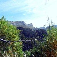 Осень, в лесах Кавказа :: Сергей Анатольевич