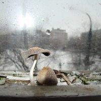 Мартовские грибочки или нарочно не придумаешь :: Елена Строганова