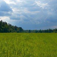 Перед грозой :: Valeriy(Валерий) Сергиенко