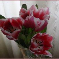 Тюльпаны :: Вера