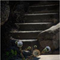 Про колючку у лестницы :: Борис Борисенко
