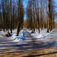 Март в Нескучном саду :: Михаил Танин