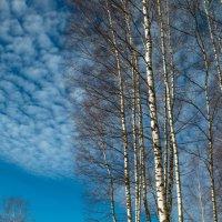 В весеннем лесу. :: Олег Козлов