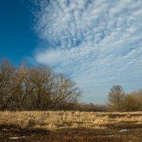 Сегодня в небе столько синевы... :: Олег Козлов