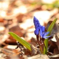 Весна идёт, весне - дорогу!!!!) :: Svetlana Kravchenko