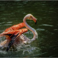 Идем на взлет....Куала-Лумпурский парк птиц... :: Александр Вивчарик