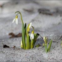Весна пришла :: LIDIA PV
