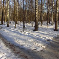Img_2863 - А там еще птички пели! Почуяли весну! :: Андрей Лукьянов