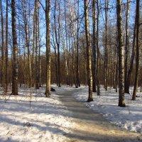 Img_2881 - А там еще птички пели! Почуяли весну! :: Андрей Лукьянов