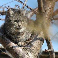 мартовский кот..) :: Ирина Ицкова