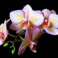 Орхидея 3 :: Viktor Eremenko