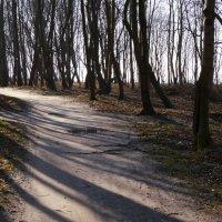 Весенние тени :: Дмитрий Лебедихин