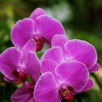 цветы :: Yulek C
