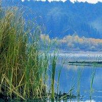 осень камыши :: petyxov петухов