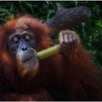 Покурить бамбук что ли???...ZOO в Сингапуре!!! :: Александр Вивчарик