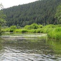 Река в горах. :: Вера Щукина