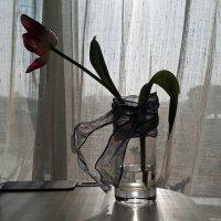 Стакан с лентой и увядающим тюльпаном на рабочем столе после праздников :: Татьяна [Sumtime]