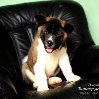 Собаки :: Екатерина Шурова