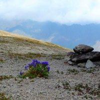 Цветок и Камень на склонах Эльбруса. (...Или кто-то просто окаменел от такой красоты...) :: Vladimir 070549