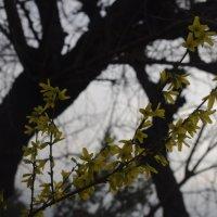 Весна в Турции :: İsmail Arda arda