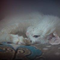 Мой ласковый и нежный кот... :: Наталия M