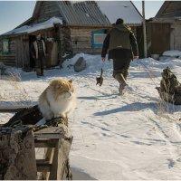 Жизнь жёлтого кота-рыбака... :: Татьяна Выборнова