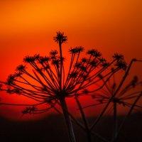 Багровым солнцем освещённый.. :: Анатолий Клепешнёв