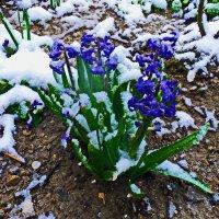 и снова зима.... :: Юрий Владимирович