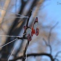 Ранняя бабочка :: DaRiA V