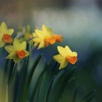 Весна... :: Valentina Valentina