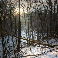 Март в лесу. :: Victor