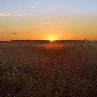 Утро нового дня :: sergej-smv