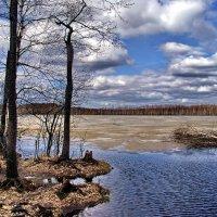 На озере до срока тает лёд... :: Лесо-Вед (Баранов)