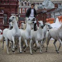 03 Конное шоу - Lorenzo Emotion horse show in Moscow :: Максим Максимов